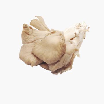 Cogumelo pleurotus granel (kg)
